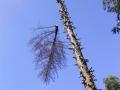 potature-tree-climbing-senza-utilizzo-di-cestello