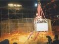 ciao-darwin-allestimento-gestione-prova-coraggio-concorrenti-bungee-jumping-allinterno-gabbia-con-tigri-2