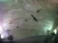 hangar-bicocca-gestione-sicurezza-ed-attivita-pubblico-su-opera-sospesa-trasaparente-4